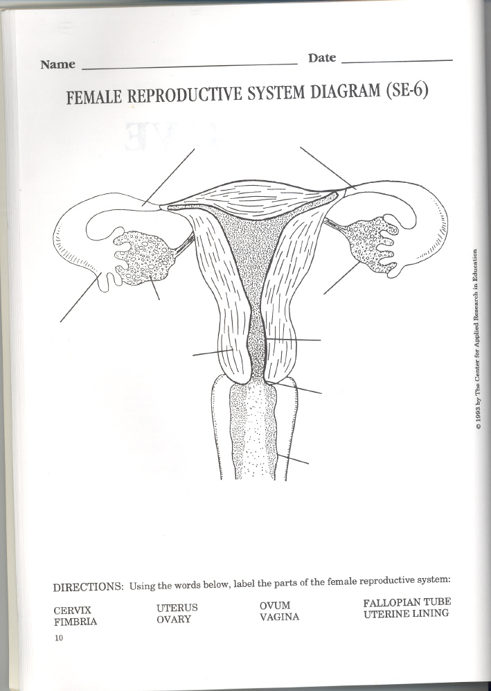 female reproductive system worksheet As0501 evaluate the male and female reproductive systems in selecting  animals  (distribute female turkey reproductive tract worksheet, correct  answers.